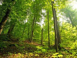 Tiny House Ökologie und Bäume als CO2-Speicher